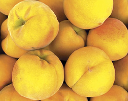 Essential oils tested against fruit-rot fungus