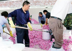 Chinese Essential Oils Market Hit By Recession