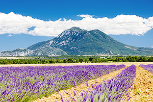 The essence of provence - healing plant diversity