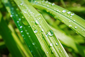 Lemongrass essential oil profile