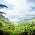 Rainforest plant combats multi-resistant bacteria
