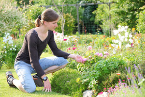 How to create a scented garden