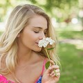 How the sense of smell works