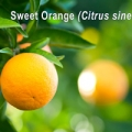 Essential oil profile of sweet orange