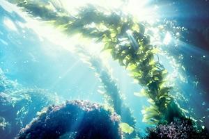 The beauty secrets of seaweed