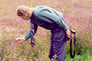 Geoff examines and photographs sweet marjoram flowers