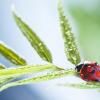 How to refresh your home with springtime aromas